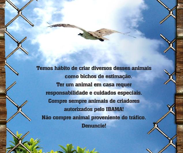 Agência de Publicidade em Brasília para o Ibama-DF